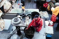 Retrieving a long-line during sablefish tagging and release cruise on JOHN N Photo