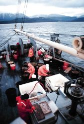 Sablefish longline operations - lines 3/4 miles long with hooks every 15 to 20 feet. Photo