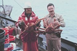 King crab caught in trawl net in Chatham Strait Photo