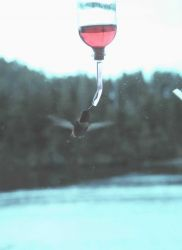 Hummingbird at Little Port Walter. Photo