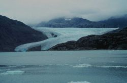 Riggs Glacier at the east end of Muir Inlet Photo
