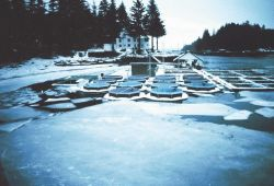 Little Port Walter in January at the salmon rearing pens. Photo