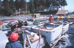 Loading the salmon smolts aboard the JOHN N Photo