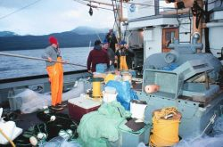 Salmon gillnetting cruise - studying smolts diurnal activities. Photo