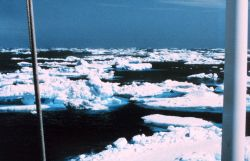 Ice floes off the Antarctic Peninsula Photo