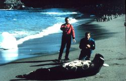 Leopard seal; Lieutenants Rich Behn and Dave Neander gingerly approach large leopard seal. Photo