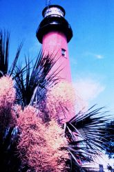 Lighthouse and palmetto Photo