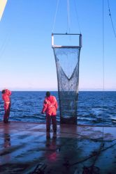 Net trawl for benthic (bottom-dwelling) biota. Photo