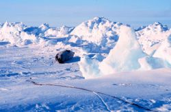 Seal resting on sea ice at the Bay of Whales Photo