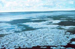Pancake ice adrift on the Ross Sea Photo