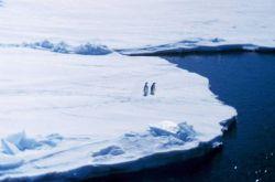 Penguins on sea ice Photo
