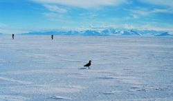 Skua and scientists on the sea ice. Photo