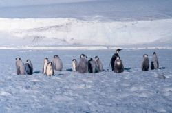 Emperor penguin colony at Cape Washington in the Ross Sea Photo