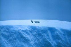 Penguin gathering on top of iceberg. Photo