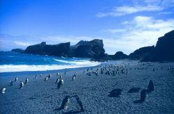 The beach at Seal Island Photo