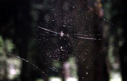 Spider web in the Washburn Range Photo