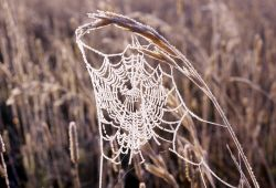 Frosted spider web Photo