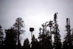 Osprey nest Photo