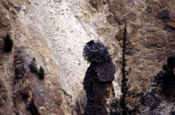 Osprey nesting in the Grand Canyon of Yellowstone Photo