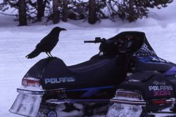 Raven on snowmobile at Canyon warming hut in winter Photo