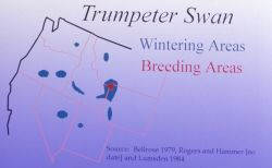 Trumpeter swan wintering/breeding areas map Photo