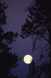 Moonrise Photo