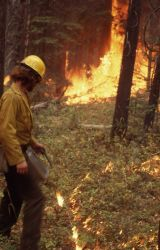 Firefighters starting fire with drip torch - Backfires Photo