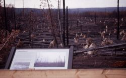Wayside fire exhibit at blow down Photo