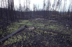 New grass growing in burned area Photo
