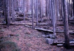Log erosion barriers near Obsidian Cliff Photo