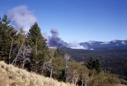 Blacktail fire Photo