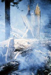 Bluff Creek fire Photo