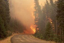 Dense smoke with orange glow preceding Crown fire on Dunraven Pass Photo