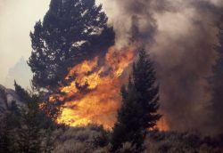 Tree tourching near Africa Lake - Ground fire Photo