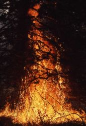 Ground fire spreading to lower tree banches near northeast entrance Photo