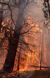 Tree torching near northeast gate - Ground fire Photo