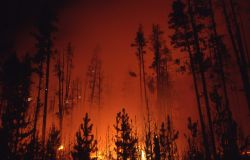 Nighttime glow of ground fire in lodgepole forest near Firehole Photo