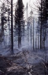 Fallen tree with ash outline - Smoke Photo