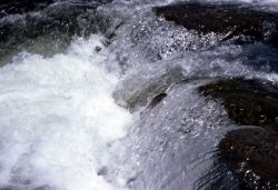 Trout jumping rapids Photo