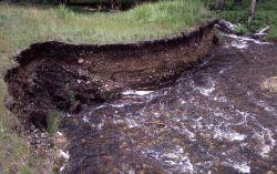 Erosion along Cottonwood Creek - Geology Photo