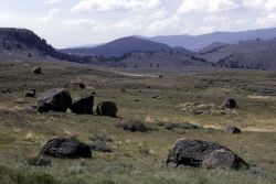 Glacial erratics scattered across Lamar Valley - Geology - Glacial Photo