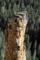 Petrified tree near Specimen Creek Photo
