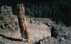 Gallatin Petrified Forest Photo