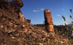 Gallatin Petrified Forest Photo