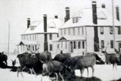 Deer being fed at Fort Yellowstone Photo