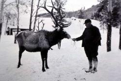 Elk feeding in Lamar Valley Photo
