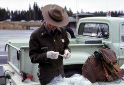Yellowstone National Park Ranger loading needle for anesthetizing grizzly bear Photo