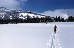 Winter ski patrol on the trail to Bighorn Pass Photo