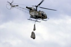 Helicopter transporting anesthetized bear cubs Photo