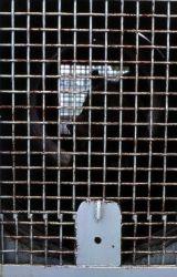 Bear in trap Photo